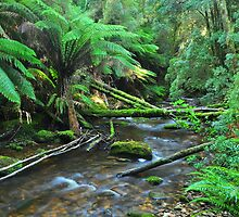 Tree Ferns Line The Creek by Terry Everson
