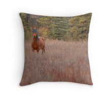 Bachelor Stallion Throw Pillow