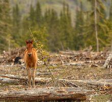 Little Big Horse by JamesA1