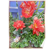 Poppy Tulips  Poster