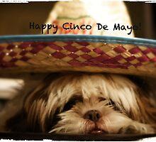 Happy Cinco De Mayo by Terry Arcia