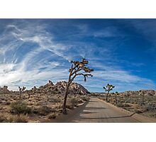 A Mojave Morning Photographic Print