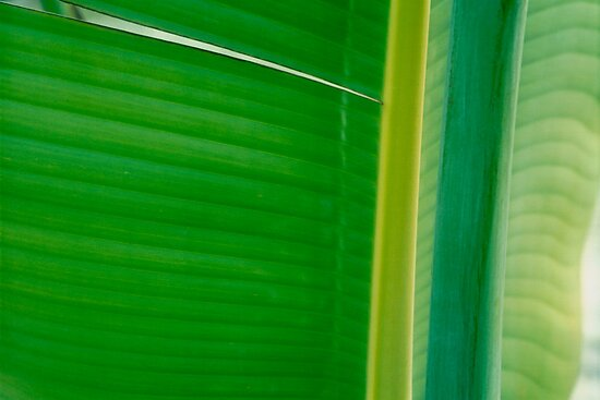 Green #10 by Janos Sison
