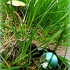 Mushroom and Robin Egg on the Lawn in the Grass by TrendleEllwood