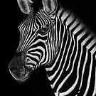 African Stallion by Sheryl Unwin