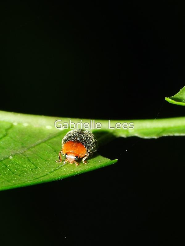 Fury Little Ladybird by Gabrielle  Lees