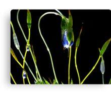 H20 Super Macro of Moss Canvas Print