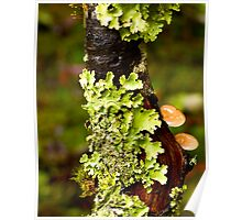 Lichen and Fungi - Cradle Mountain NP Poster
