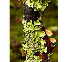 Lichen and Fungi - Cradle Mountain NP Photographic Print