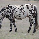 Zebra Horse by ScenerybyDesign