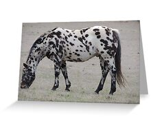 Zebra Horse Greeting Card