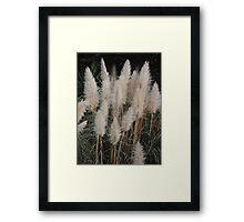 Brush Tails Framed Print