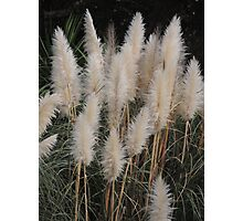 Brush Tails Photographic Print