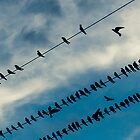 Swallows on the wires 2 by RichardPhoto
