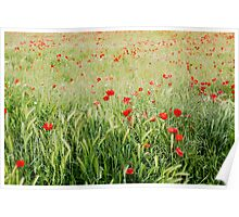 Poppies Poster