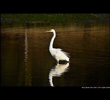 Ardea Alba - Great White Egret Standing In Porpoise Channel - Stony Brook, New York by © Sophie W. Smith