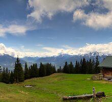 Where the grass is green by Stefan Trenker