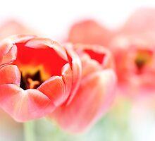 Tulips, a little less fresh... by Bob Daalder