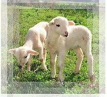 Spring Lambs Grazing On Farmland by taiche