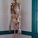 Bones by Penny Rinker