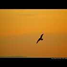 Seagull Flying Above Long Island Sound - Stony Brook, New York by  Sophie Smith