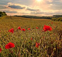 Poppies by Stuart  Gennery