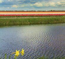 Tulip fields 4 by Jasna