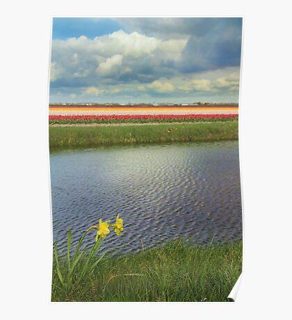 Tulip fields 4 Poster