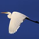 Finished fishing for the day Egret In Flight  by Kym Bradley