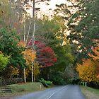 SUNRISE MT. WILSON. BLUE MOUNTAINS, NSW. by Phil Woodman