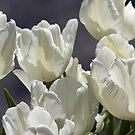 White Tulips by Steven Huszar