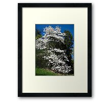 The magestic Magnolia Framed Print