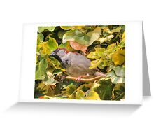 House sparrow (Passer domesticus) Greeting Card