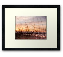 through the grasses Framed Print