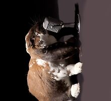 Singing Bunny by L2Photography
