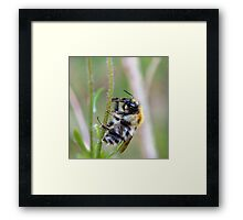 Bee on stalk Framed Print