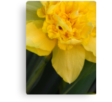 Double Daffy Canvas Print