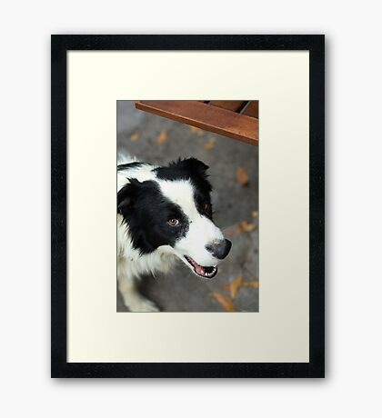 unexpected companion Framed Print