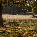 Autumn in Richmond Park, London by DestnUnknown