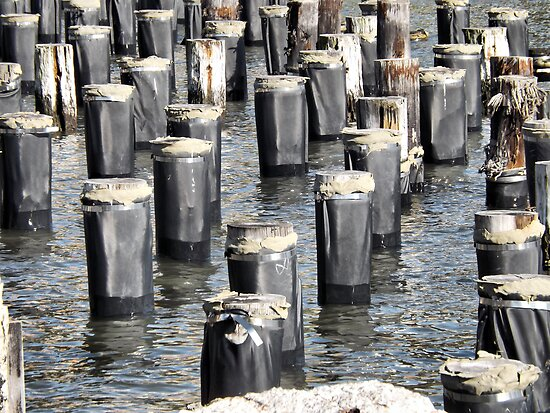 Pilings, East River by joan warburton