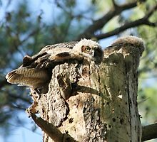 Outgrowing the nest by Heather King