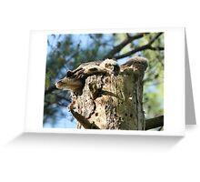 Outgrowing the nest Greeting Card