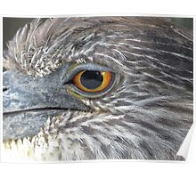 Immature Yellow Crowned Night Heron Poster