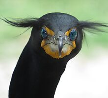 Double-Crested Cormorant / Bad Hair Day!!! by enyaw