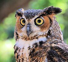 Great Horned Owl by Rosalie Scanlon