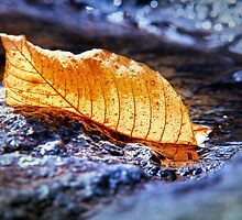 Leaf in a Puddle on a Rock by Nazareth