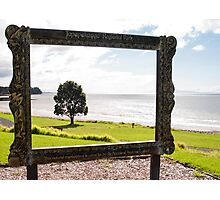 tree in picture frame Photographic Print