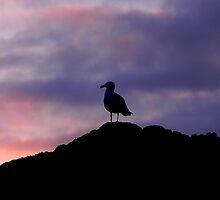 Oregon coast sunset by DanielsPics