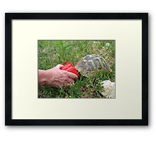 Adult Hermann Quenches His Thirst Framed Print