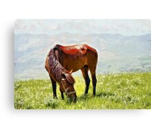 Horse at grass painting Canvas Print